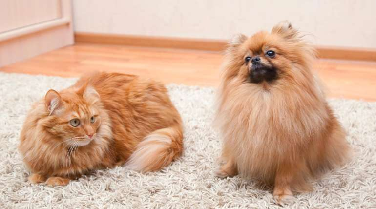 Keep Pets Off Carpet & Furniture with Citrus